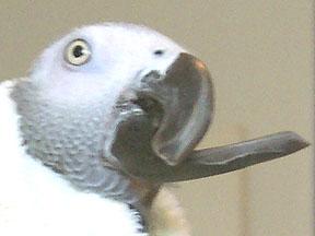Burge Bird Services